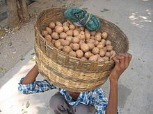 chikoo-sapote-india